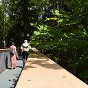 Anykščių šilelio medžių lajų takas