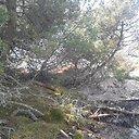 Gaisras Kuršių Nerijos nacionaliniame parke