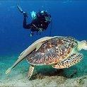 Milžiniškas jūros vėžlys