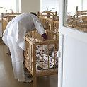 Vilniaus sutrikusio vystymosi kūdikių namai