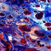 TKS eksperimentas: ar Marse gali augti grybai?