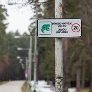 """Migruojančias varles Vingio parke saugos ženklai """"Dėmesio – gatvėje varlės"""""""