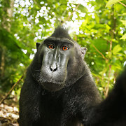 5 meno kūrinių teismai: nuo beždžionės asmenukės iki Barbės orkaitėje
