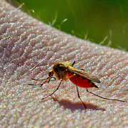 Fourth malaria case diagnosed in Lithuania this year