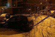 Neatlaikę šlapio sniego Lietuvoje virto medžiai, ugniagesiai sulaukė 50 iškvietimų