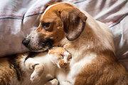 Mokslininkai ištyrė, kas labiau myli žmones – katės ar šunys