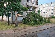 Audra Utenoje nulaužė medį