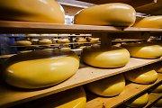 Olandų ūkininkus švarina brangius sūrius įtariamai rusams vagiančios gaujos
