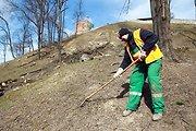Muziejaus direktorė Birutė Kulnytė: Gedimino kalnas neliks plikas, galbūt kažkas bus pasodinta