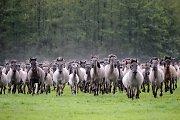 Kodėl būtina paženklinti arklius