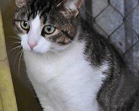 Jurbarko katė (Tauragė)