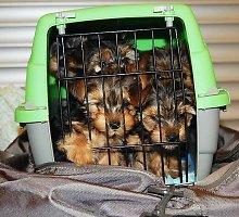Be dokumentų iš Lietuvos į Norvegiją vežti šuniukai greičiausiai bus užmigdyti