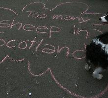 Po referendumo atsigaunantys škotai: tai – dar ne vyriausybės pergalė