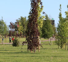 Klaipėdos savivaldybės pirkiniai: už sodinamą medį – 519 eurų