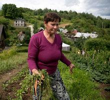 Kaimą prie Vilniaus terorizuoja šernai: laužo tvoras, ryja daržoves ir gąsdina vaikus