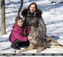 Lietuvos pašonėje gyvenanti baltarusių šeima prisijaukino vilkų šeimyną