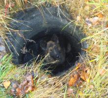 Šilutėje iš duobės ištrauktas šuo spruko nuo gelbėtojų