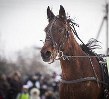 Specialistai sklaido mitus apie žirgų lenktynes žiemą: šalčio jie nebijo