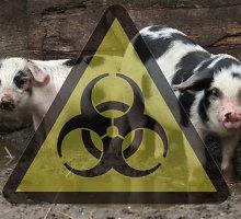 Ignalinos rajono ūkyje – naujas afrikinio kiaulių maro protrūkis
