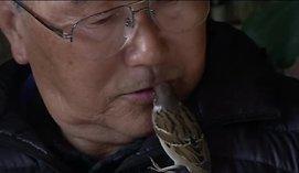 Japonų šeimai žvirblis atstoja ir katiną, ir šunį