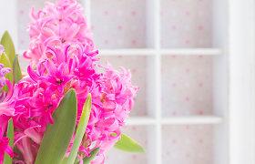 Spalvinga kompozicija balkone: pavasarinės gėlės