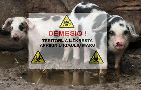 Nesąžiningiems kiaulių augintojams – sankcijos