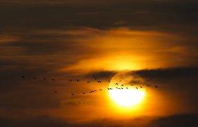 Saulė gimimo metu gali nulemti gyvenimo trukmę