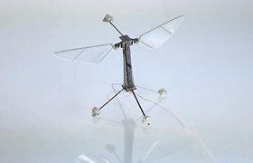 Harvardo mokslininkų sukurtas robotas-bitė pakilo pirmajam skrydžiui