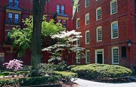 Harvardo dėstytojams uždrausta mylėtis su studentais