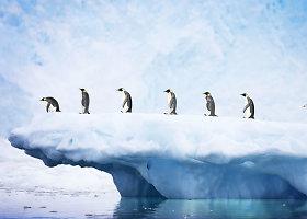 Ledo ir pingvinų karalystė – Antarktida