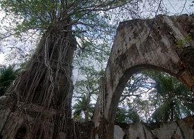 Britų kolonizatorių apleistoje Roso saloje karaliauja gamta