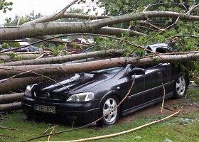 Palemone ant automobių nuvirtęs medis