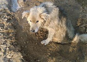Išgelbėtas į žemę užkastomis kojomis šuo