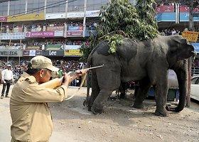Rytų Indijoje siautėjo į miestą atklydęs dramblys