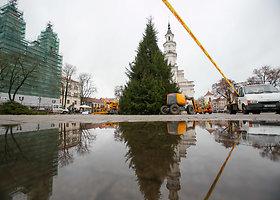 Išmanioji Kauno Kalėdų eglė įgauna formą
