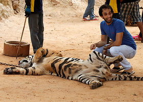 """Tailande surengtas reidas """"Tigrų šventykloje"""""""