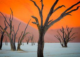 """Siurrealistų vaizduotei neprilygstantys """"Mirusio slėnio"""" Namibijos dykumoje peizažai"""