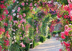 Saulėti ir ryškūs rožių sodai