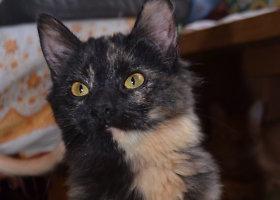 Dovanojama katė Pipa