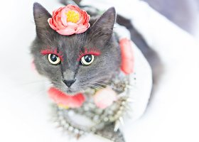"""Rumunės glamūrinė katė užkariauja """"Instagram"""""""