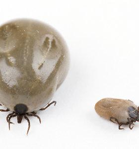 5 klaidingi įsitikinimai apie erkių platinamas ligas, kuriuos paneigia entomologai