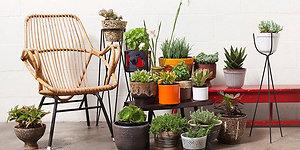 Kambariniai augalai - gyva interjero puošmena