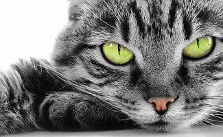 Kaip išnaikinti kačių šlapimo kvapą namuose?