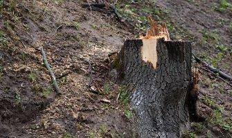 Kėdainių rajone vagys nupjovė ir išvežė 49 medžius