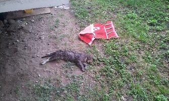 Vilniaus S.Konarskio gatvėje – kruvina kačių egzekucija