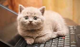 Mokslininkai: katės nemyli savo šeimininkų