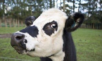 Gudeliuose ugniagesiai vadavo srutų šulinyje įstrigusią karvę