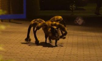 Šuns-voro kūrėjui Sylvestrui Wardęgai treji metai kalėjimo nebegresia