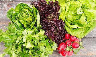 Sveikiausios lapinės daržovės ir receptų pasiūlymai