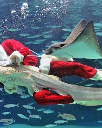 Kalėdų Senelis su akvalangu Japonijoje skleidė šventinę nuotaiką